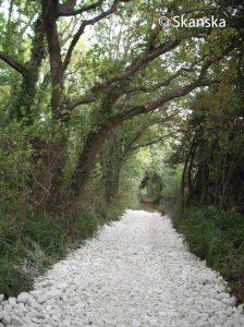 Two Mile Coppice bridleway improvements (large version)